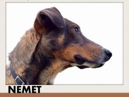 NEMET chart mix młody łagodny wesoły  pies do adopcji   śląskie Katowice