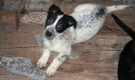 3-miesięczne psie dziecko Rocky   dolnośląskie Lubin