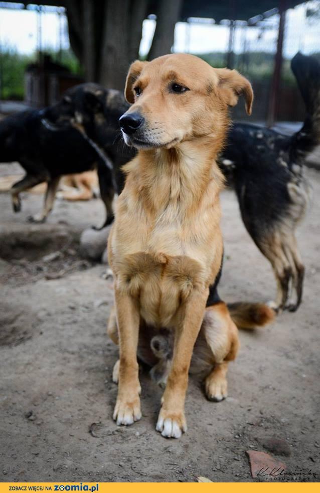 Frędzel, niekonfliktowy, cudowny psiak czeka na wspaniały dom!