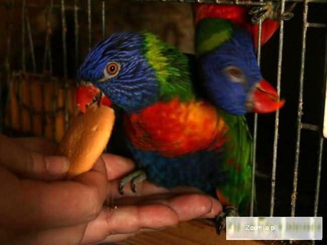 Różne ptaki.