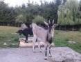 'kozy-bardzo ładne-Okazja!