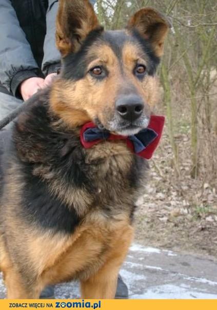 FRED – z tym psem przy nodze szczęście spotkasz po drodze:)