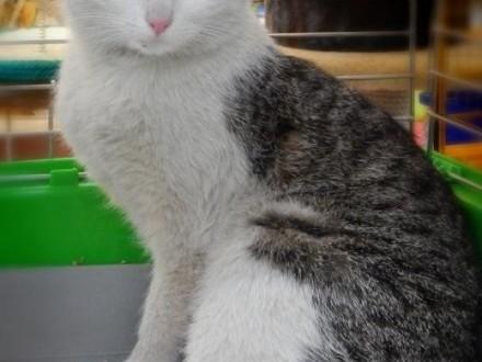 Milka bardzo miła koteczka,  małopolskie Kraków