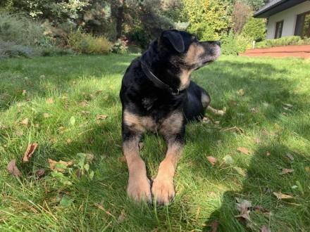 Pestka - przyjazna  delikatna sunia szuka domu!  Pestka – to starsza około 11 letnia sunia z ogromnym bagażem okrutnych doświadczeń w kontakcie z człowiekiem_   Jej życie jak życie każdego psa - przyjaciela człowieka powinno być wypełnione miłością  zabaw