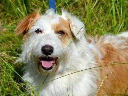 Tola - piękna sunia  psi aniołek :)