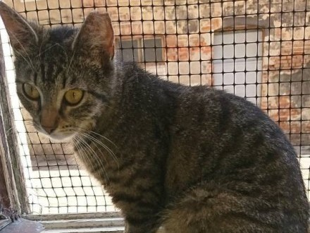 Roczna kotka Pchełka szuka domu