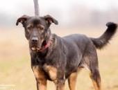 Aman - łagodny pies z dużą dawką miłości potrzebuje domowego ciepła