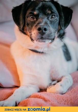 KACPEREK - kochany psiak, który nigdy nie miał domu, błaga o szansę!,  mazowieckie Warszawa