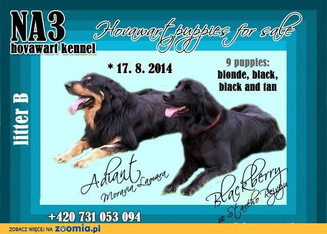 HOVAWART puppies with pedigree – kennel NA3 (Czech Republic)