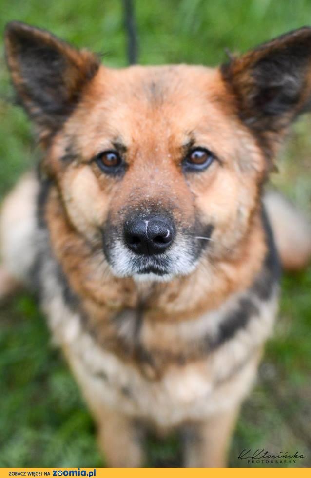 Grzeczna, przyjazna Berta, lubiąca inne psy sunia mix owczarek