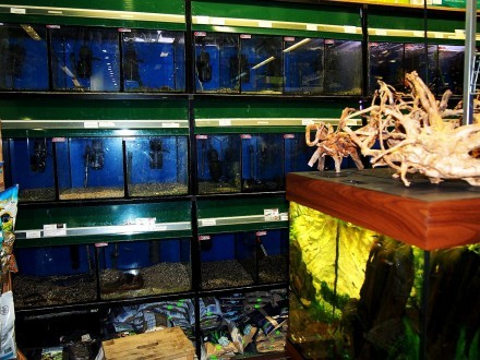 Regał  regały akwarystyczne Aquaboro sklepowe hodowlane - nawet 4500 L