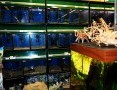 Regał, regały akwarystyczne Aquaboro sklepowe hodowlane - nawet 4500 L