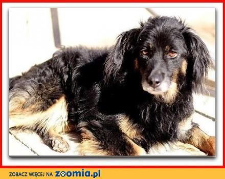 Średni,spokojny,grzeczny,bezproblemowy,łagodny psiak TAPIŚ_Adopcja_