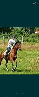 Klacz koń konie kon filmik