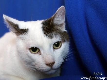 Boluś - sympatyczny kotek