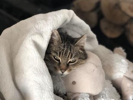 Oddam kotkę w dobre ręce   mazowieckie Warszawa