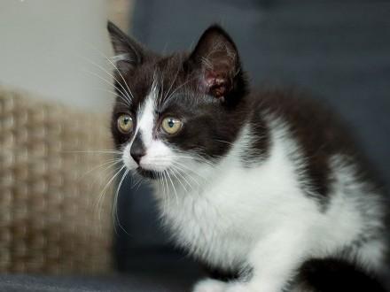 Polly z Fundacji Miasto Kotów   łódzkie Piotrków Trybunalski