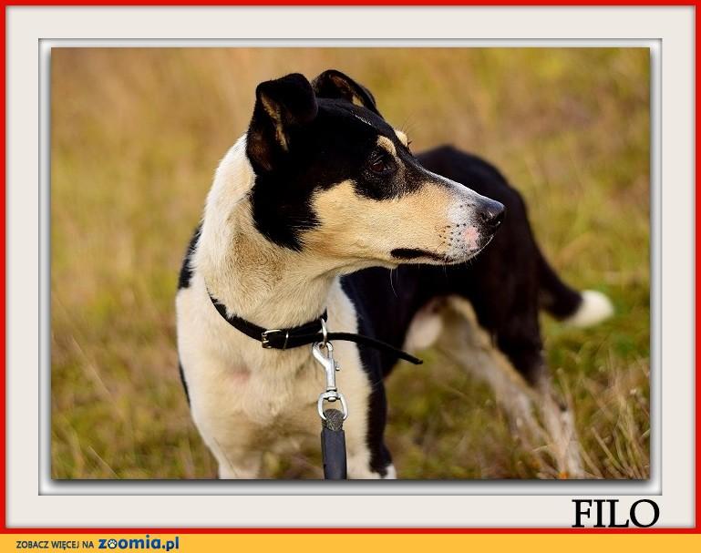 Średni,przyjazny,towarzyski,aktywny,zaszczepiony piesek FILO_Adopcja_