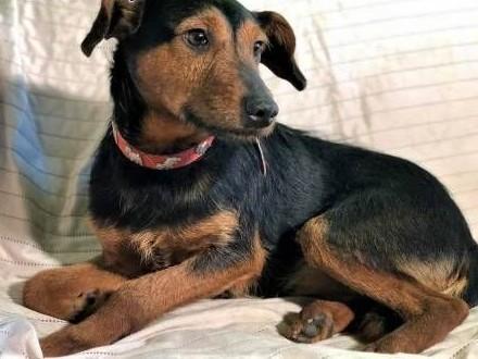 ATOS – 1,5-roczny, wrażliwy psiak w typie terriera szuka domu!,  wielkopolskie Poznań