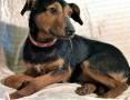 'ATOS – 1,5-roczny, wrażliwy psiak w typie terriera szuka domu!,  wielkopolskie Poznań