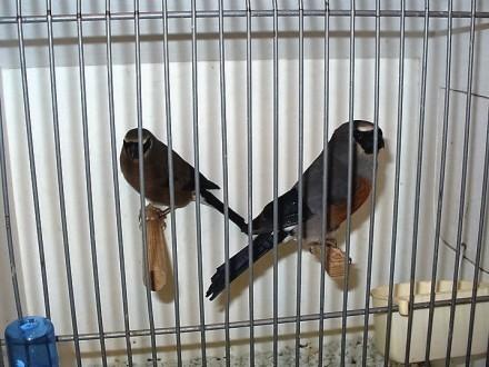 Ptaki Egzotyczne zwolle