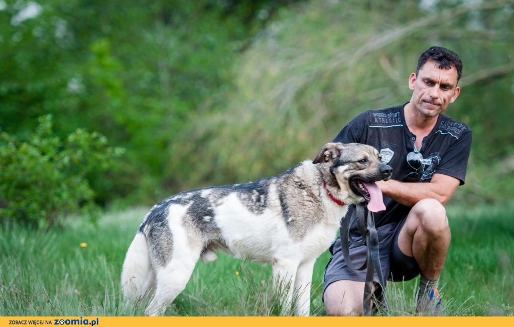 Dante, duży psiak szuka kochajacego domu!