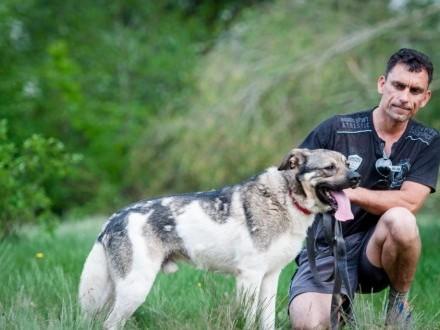 Dante  duży psiak szuka kochajacego domu!