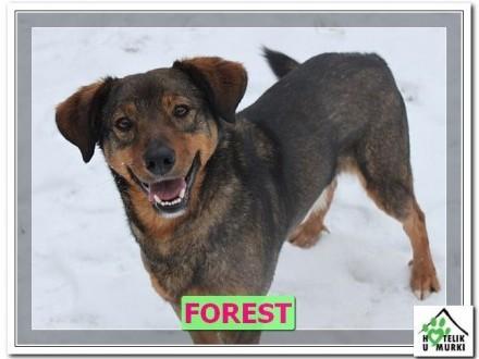 Forest, wesoły przyjazny zwierz, pokocha Cię całym sercem, wiesz?