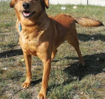 ROLO - przesympatyczny psiak z rozmerdanym ogonem szuka domu   mazowieckie Warszawa