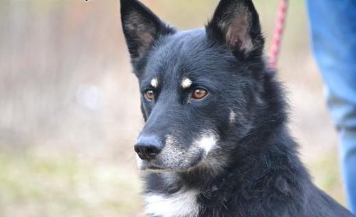 Gucio bardzo fajny pies ok 5 lat   wielkopolskie Poznań