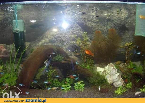 Kupie Narybek . młode małe rybki