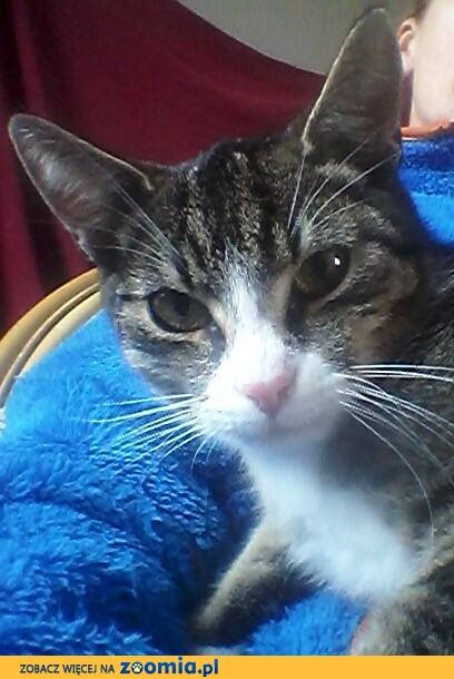 Felek, nieśmiały kotek szuka domu!