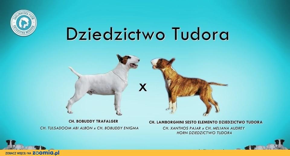 Wyjątkowe Szczenięta z jednej z pierwszych hodowli w Polsce!