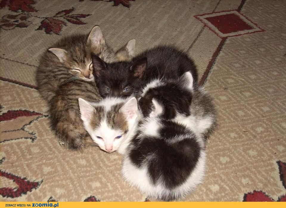 Oddam kotki w dobre ręce!