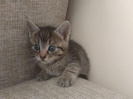 Oddam za darmo śliczne domowe kotki