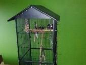 żako gadający 1,5roku ręcznie wykarmiony+klatka i transporter