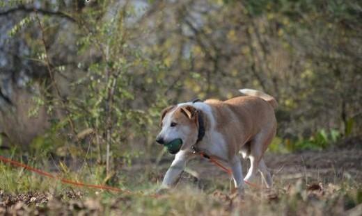 Edek-nieprzecietny pies szuka nieprzecietnego domu!   mazowieckie Warszawa