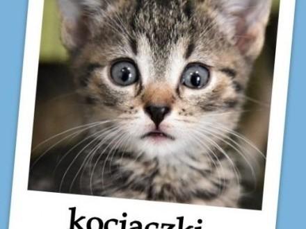 PILNE ! Potrzebne domki dla schroniskowych kociaków o różnym umaszczeniu   małopolskie Kraków