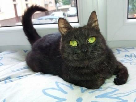 Śliczna, roczna kotka Edith szuka domu