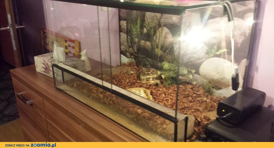 Żółw Stepowy + Terrarium + Akcesoria
