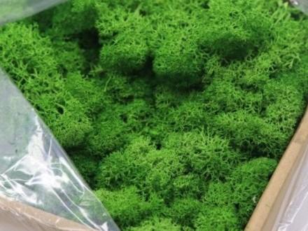 Najlepszy naturalny MECH CHROBOTEK do terrarium PAKA 60 g