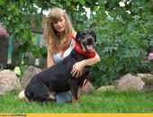 2 letni Niko, żywiołowy, grzeczny i przyjazny, adoptuj!