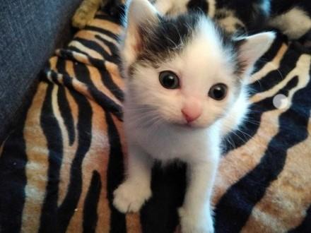 Zaadoptuje małego kotka