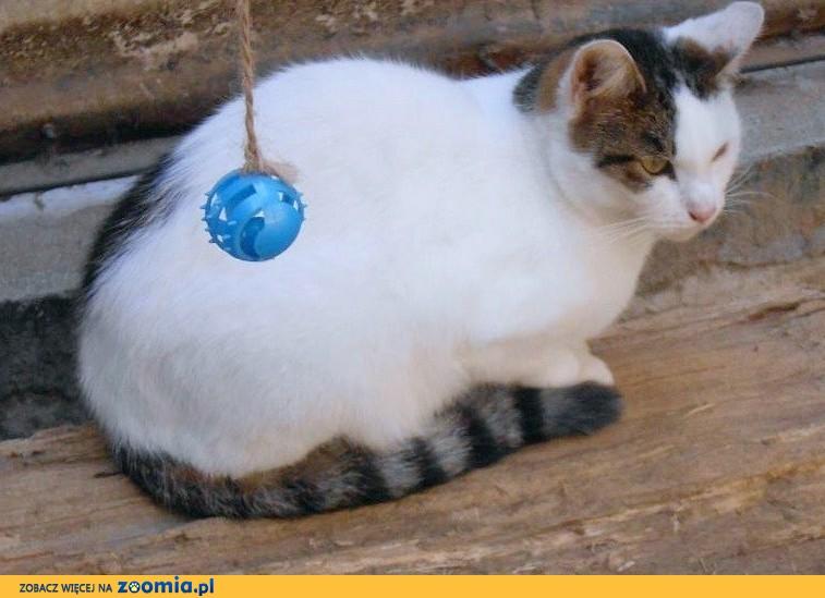 Dzikus w przytułku dla kotów