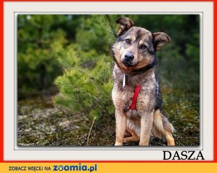 Młoda sunia sterylizowana łagodna tulaśna przekochana DASZA_Adopcja_