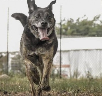 TEODOR - kochany  wrażliwy psiak szuka domu!   mazowieckie Warszawa