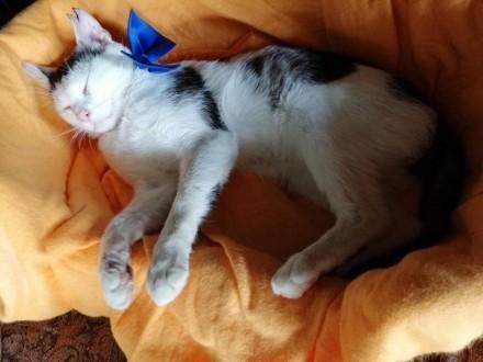 Fuksik  miluśiński koteczek szuka domu!