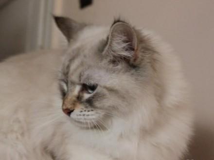 koteczka Jutrzenka