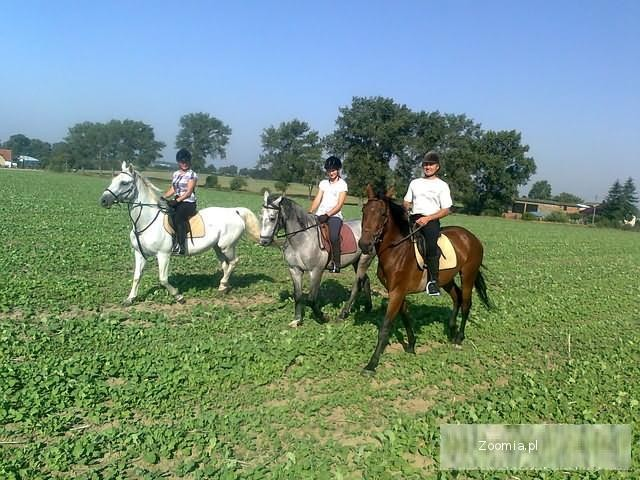 Nauka jazdy konnej PROMOCJA Gniezno-Strychowo