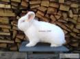 wielkopolska króliki FBB NB KC